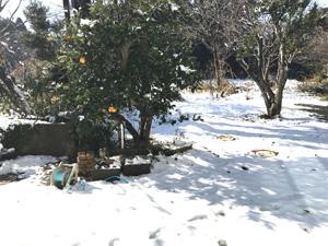 snow2018_2